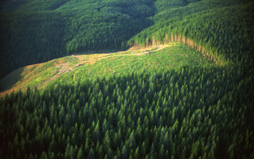 Global Forest and Paper Industry Releases Policy Statement on Climate Change