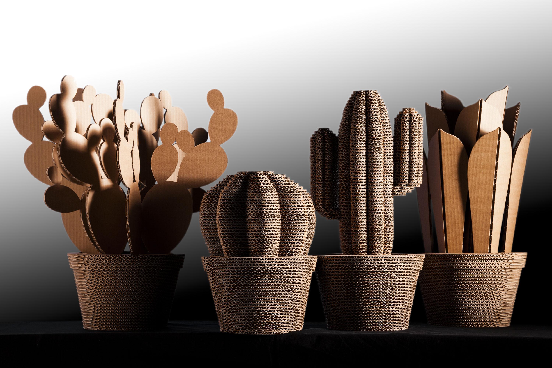 cactus-013a